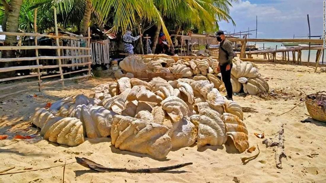 Škeble zabavené rybářům na Filipínách
